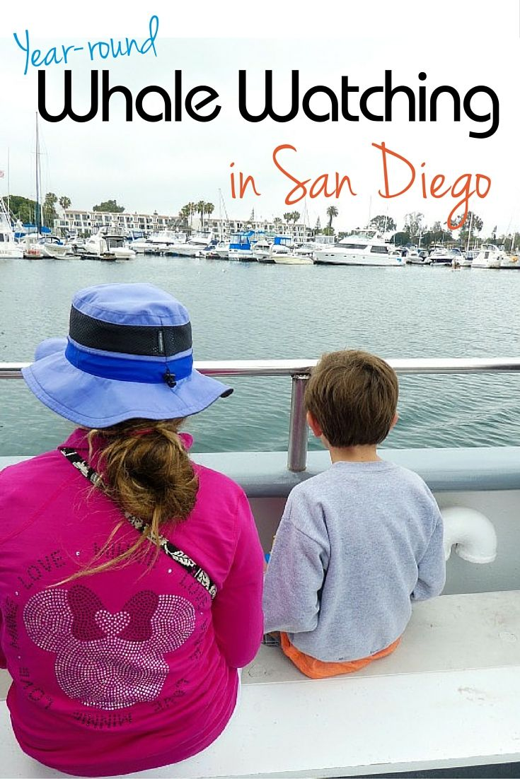 Hoping to whale watch in California, but not visiting during the typical season? San Diego Whale Watching has you covered, and offers…