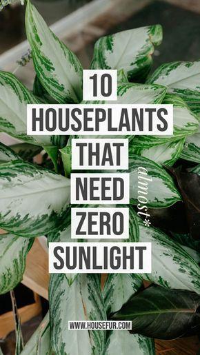 10 Houseplants That Need (Almost) Zero Sunlight   House Fur