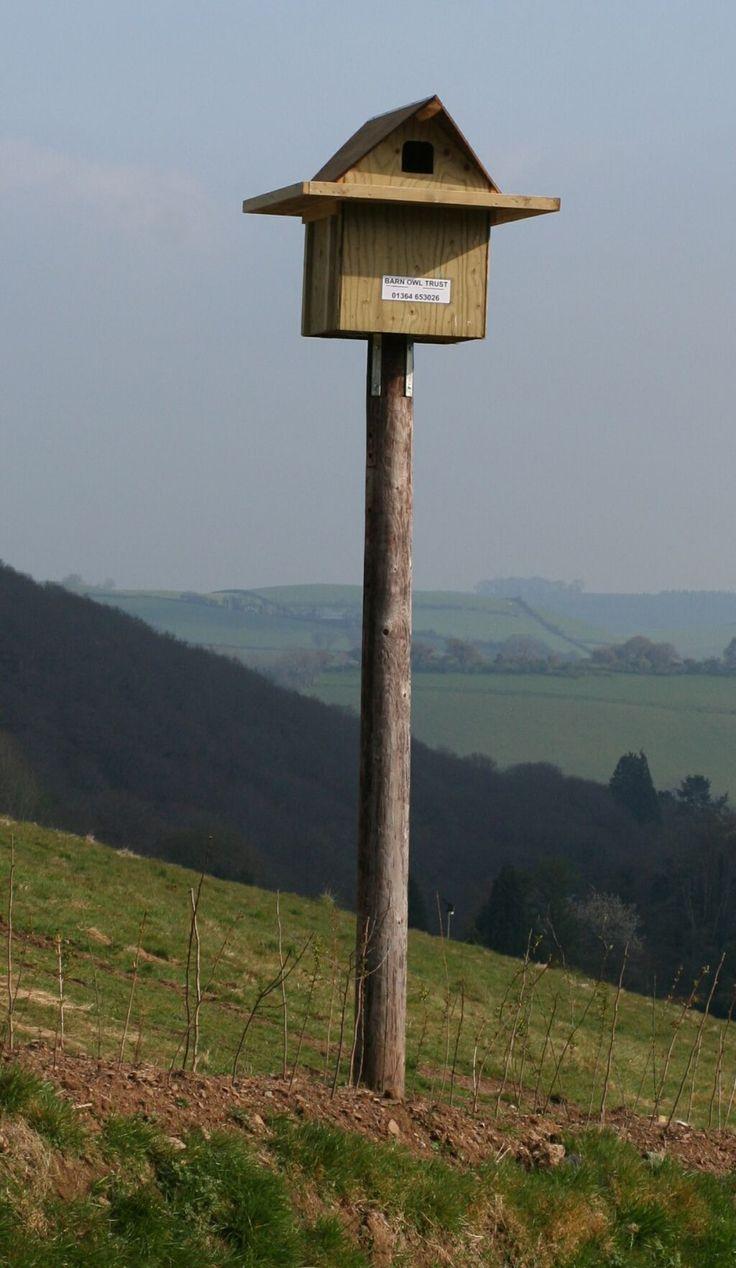 Best 25 owl house ideas on pinterest owl box nest box for Bird feeder pole plans