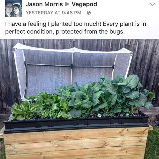 Instagram media vegepod - Reposting a Jason Morris smashing out some mean veggies. Nice work China! Large Vegepod, Melbourne