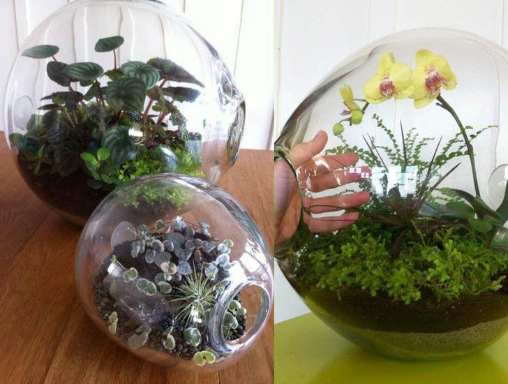 Orchid Terrarium Part 56