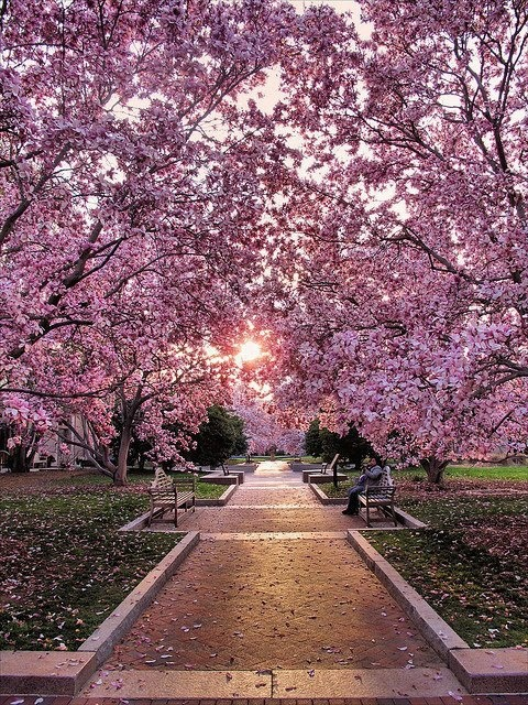 This is heaven for me! I would love to wake up every morning to flowers, and fall asleep on a bed of roses! #Spring