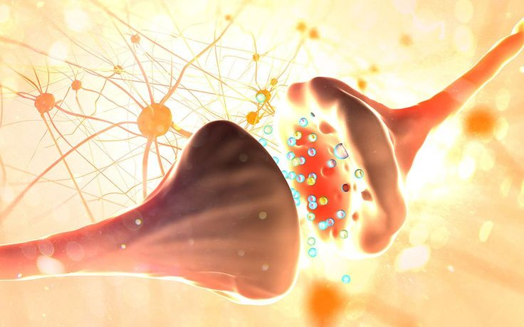 Researchers have discovered a new pain-signaling pathway in nerve cells that eventually could make a good target for new drugs to fight chronic pain. The findings, published in the journal PLoS Biology by a UT Dallas neuroscientist and his colleagues, suggest that inhibiting a process called...