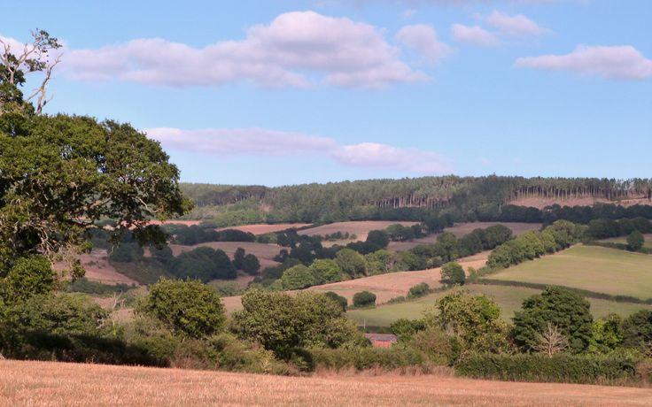 Mutters Moor from Shepherds Lane, Colaton Raleigh in East Devon Living in Colaton Raleigh East Devon