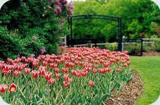 Lake Harriet Rose Garden in Minneapolis