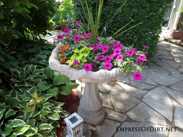 Got a cracked concrete bird bath? They make great garden planters. See ideas for planting succulents, annuals, water plants, and miniature gardens.