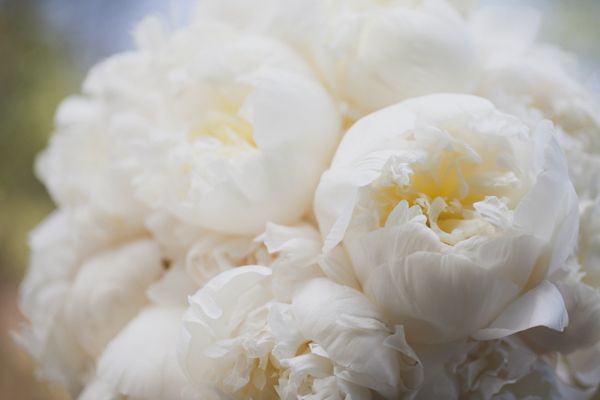 beautiful white bloomsPhoto Books, Floral Design, Beautiful White, Design Decor, Instagram Pictures, Sky Events, White Peonies, Beautiful Things, Favorite Flower