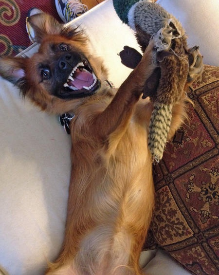 Ginger the Mixed Breed-She LOVES having fun!