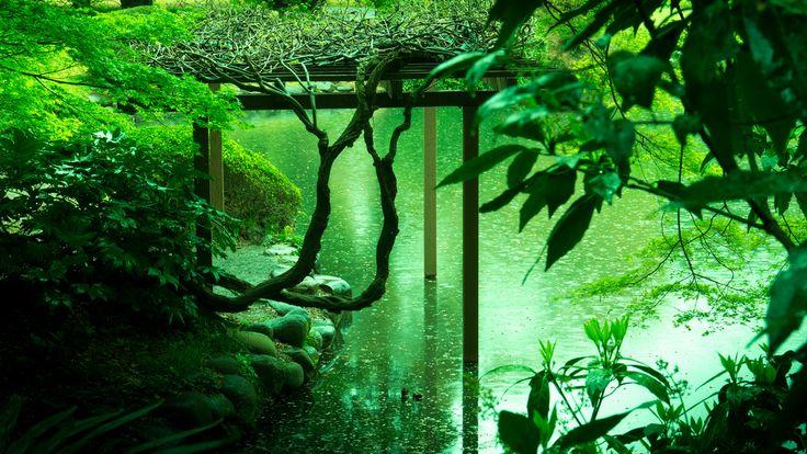カメラの瞬き ~そなたは美しい~(仮) : 雨の日だけの、約束のない逢瀬。 ~新宿御苑~