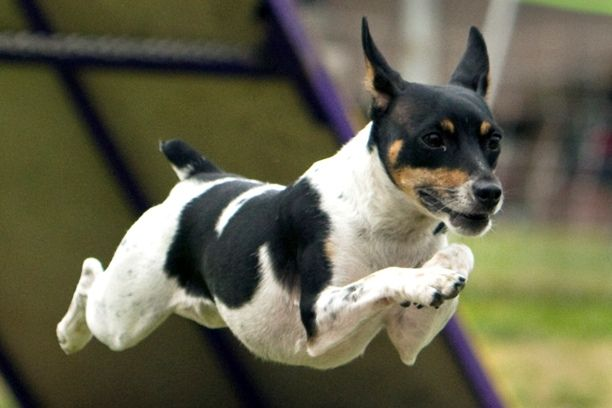 My Dazee Dog flies just like this one!