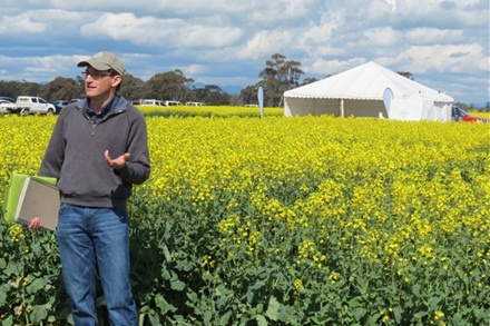 New canola introduced at Horsham field walks - Agriculture - Cropping - General News - Stock & Land