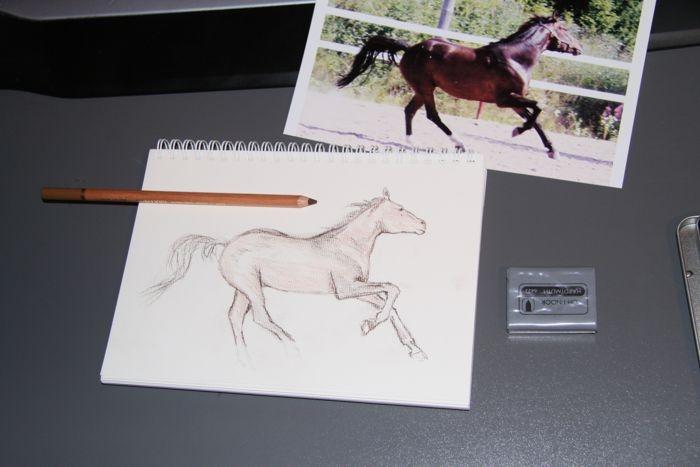 Horse, draw-training