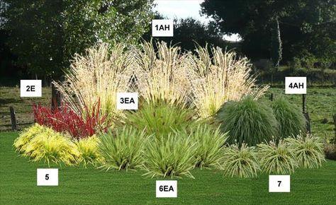 Massif d angle de graminées - Pépinière, plantes, jardinerie, vente en ligne