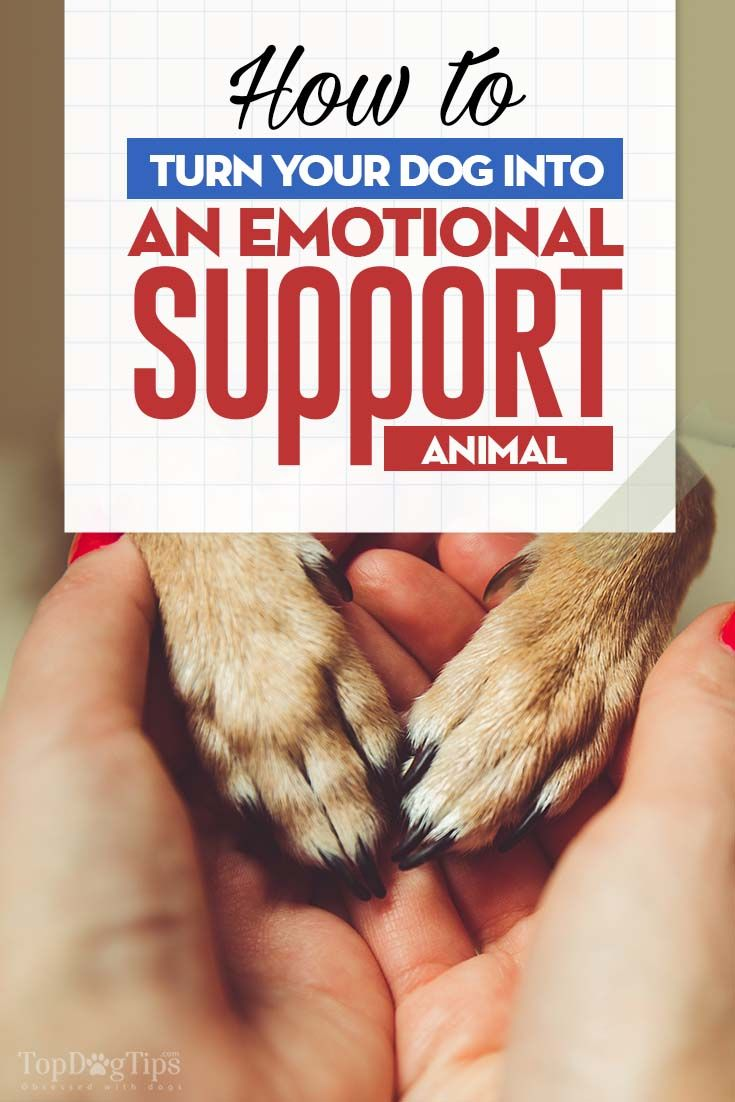 How To Make Your Dog An Emotional Support Dog Support Dog
