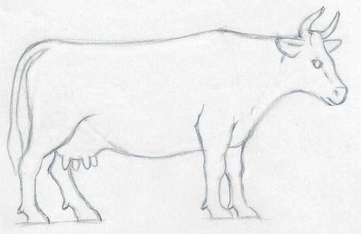 cow side view coloring pages - photo#7