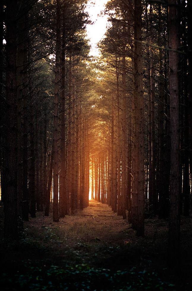 Horsford woods by Matthew Dartford