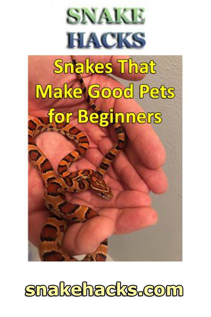 Snakes That Make Good Pets for Beginners Snake, Snake