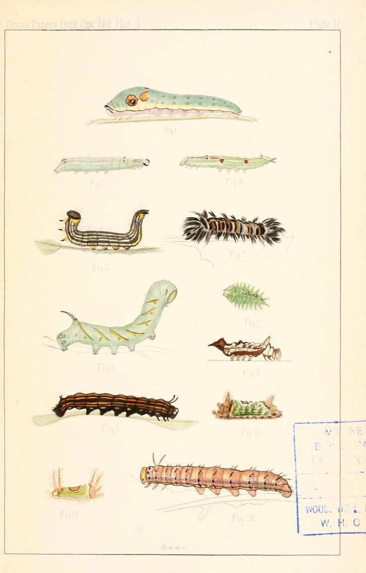 Caterpillars. Entomological correspondence of Thaddeus William Harris, M. D.  Boston,Boston Society of Natural History,1869.  Biodiversitylibrary. Biodivlibrary. BHL. Biodiversity Heritage Library