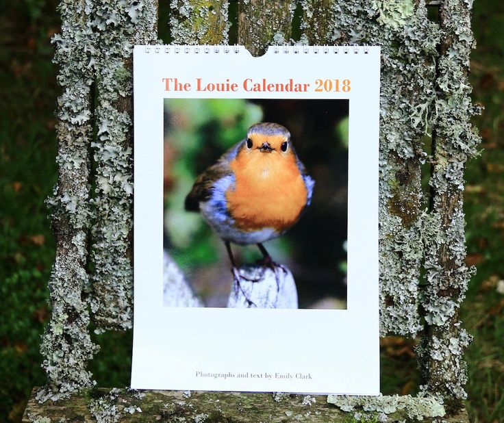 2018 Calendar, Robin Calendar, 2018 Bird Calendar, Bird Calendar, Monthly Calendar, Christmas Gift, Wall Calendar, Louie Robin, Larryware