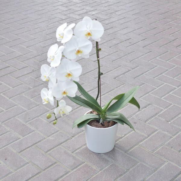 Send Bouquet Online Flower Delivery Dubai Flower Station Dubai With Images Flower Bouquet Delivery Online Flower Delivery Flower Delivery