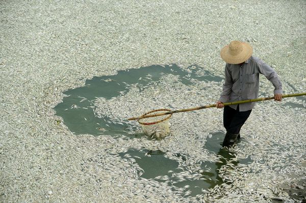 Current Events!! Pollutants From Plant Killed Fish in China - NYTimes.com