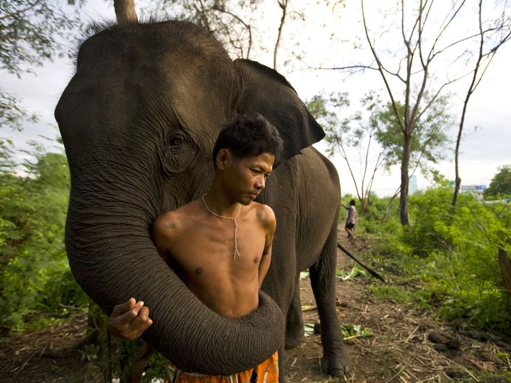 Elephants can recognise the gender and ethnicity of human voices | The Independent