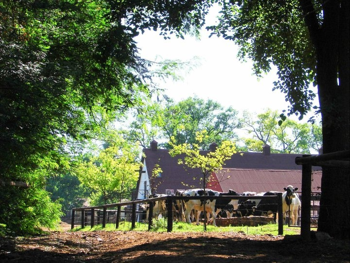 Irene Dairy Farm - my favourite place in the whole world - Irene