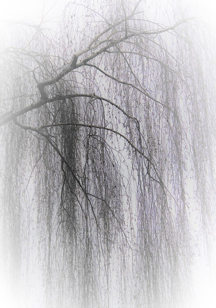 BIRCH 桦树枝 by Yichun Zhang on 500px