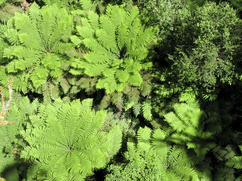 how to draw fern plants in forest
