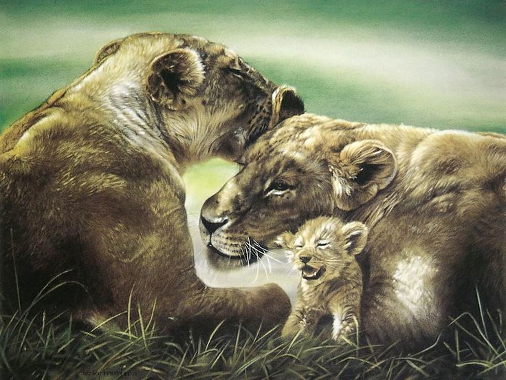Wild animal paintings art animal oil painting a for Animal oil paintings