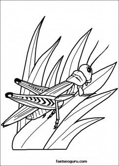 Grasshoppers childrens coloring sheets - Printable Coloring Pages For Kids