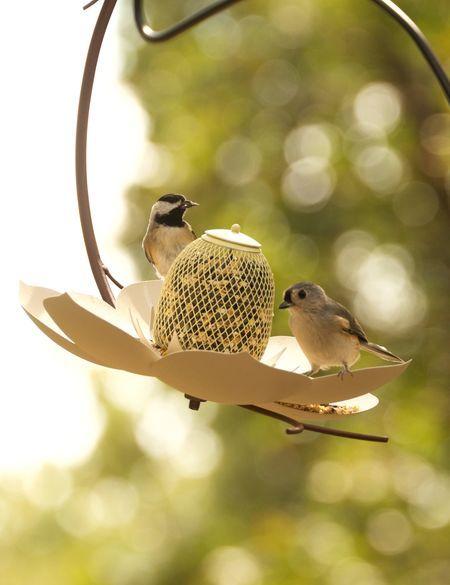 Magnolia Hanging Bird Feeder