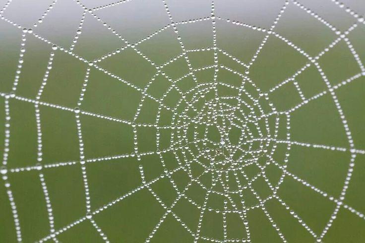 Macro cobweb