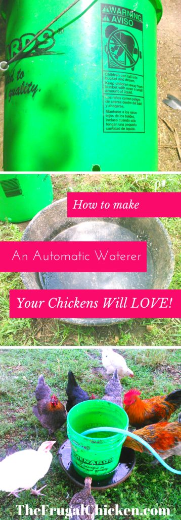 Here's the easiest automatic chicken waterer you'll ever make. You need just 1 tool! Keep those chickens cool this summer and make your life easier! From FrugalChicken