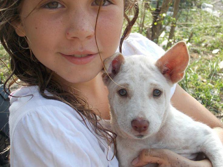 Cute balinese puppy