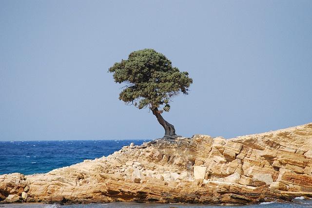 Monodendri Tree in Lipsi, Greece It's the tree in our logo & symbolizes #Strength #beauty & #magic
