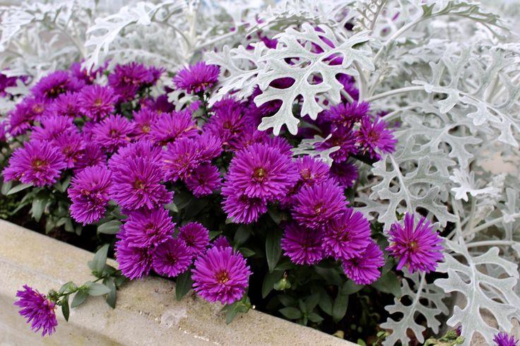 Flowers. Norway Langevåg