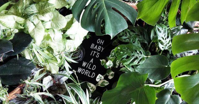 Jungalicious Happy Friday Eve Plantsmakepeoplehappy Plantlife Plantlove Instaplant Plantsofinstagram Houseplants Houseplantclub Indoorplants Indoorgarden Iloveplants – Garden Development