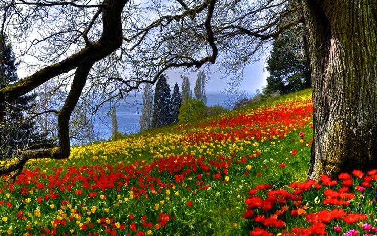 40c73317070556d055443b95fdab9c2f  garden photos eye - Matthew Arnold Lines Written In Kensington Gardens