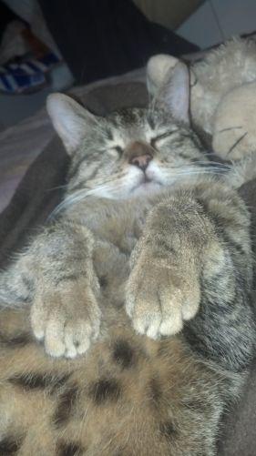 Titine Type : Chat domestique poil court Sexe : Femelle Age : Junior Couleur : Tigré Taille : Moyen Lieu : Oise - 60 (Picardie) Refuge : L'école du chat de l'Oise (Oise) AGNETZ Tél : 03 44 19 57 43 ou 03.44.45.84.34 Contact Cynthia : 06/15/22/28/07 Titine fait partie de tous ces malheureux chats qu'on jette un jour dehors... Pour son oeil , rien à faire, ce serait de naissance mais cela ne pose pas de problème. Elle est très gentille et câline.