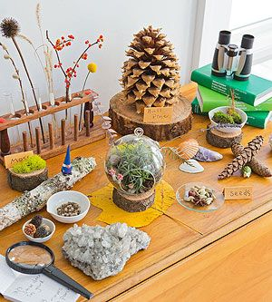 Nature table ~ I can't seem to find test tubes in a wood holder like the one featured here (I've got bright blue plastic).