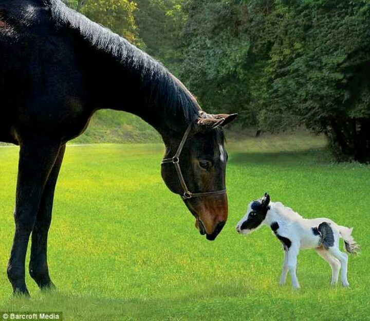 Einstein the smallest horse in the world - photo#1