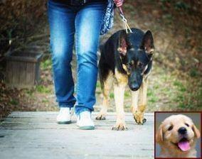 House Training A Puppy Uk And Dog Behavior Internship Dog