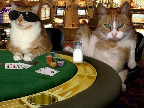 Gambling cat 4t com top online casino