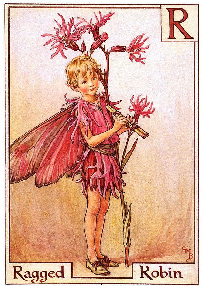 """Ragged Robin""  художник: Сесиль Мэри Баркер, арт, фея, Куку́шкин цвет обыкнове́нный (лат. Lýchnis flos-cúculi), серия: Alphabet Fairies"