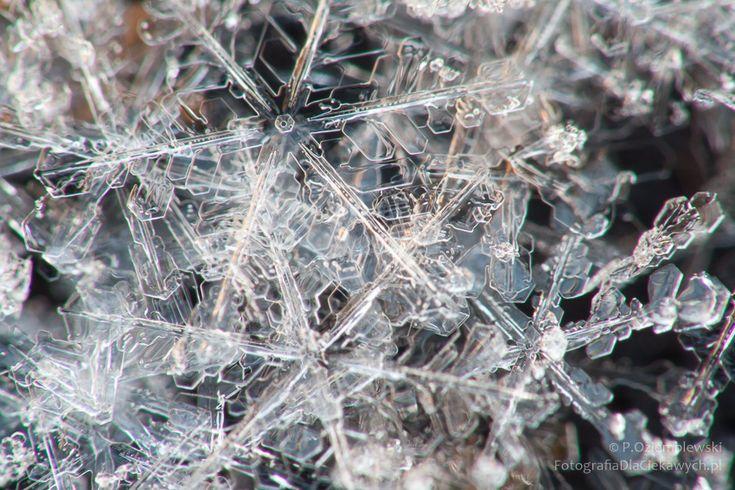 Zdjęcia zimy – zobacz 17 sposobów i zimowych inspiracji