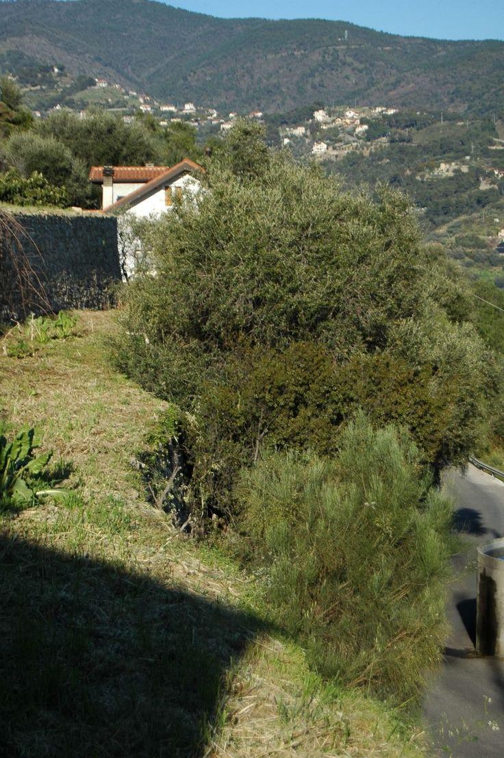 Vallebona (IM), Via San Sebastiano