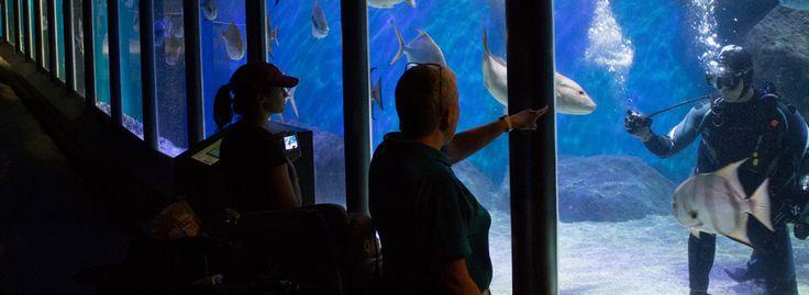 Virginia beach aquarium coupons