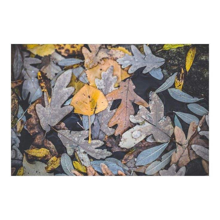 Gota de agua perlada sobre lecho de hojas _ Pearly water drop on a bed of leaves imarchi      #pearl #perla #gotadeagua #waterdrop #roadtrip #snow #frio #sierra #cold #mountain #winteriscoming #sierrademadrid #navacerrada #puertodenavacerrada #madrid #igersmadrid #ig_madrid #themadridbible #instamadrid #spain #españa #picoftheday #photooftheday   Imarchi photography  Also in Instagram here: http://ift.tt/2hAbqxo photographers on tumblr original photography Spanish photographers imarchi…