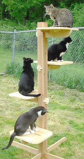 4 level outdoor cat tree